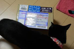 Ichigo0000625