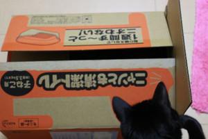 Ichigo0000640