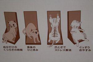 Yuzu00000053